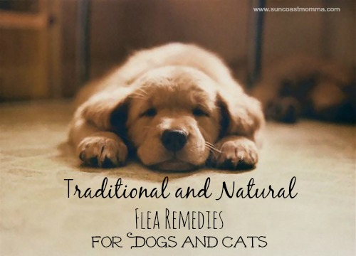 traditional and natural flea remedies for dogs and cats chronic mom life. Black Bedroom Furniture Sets. Home Design Ideas