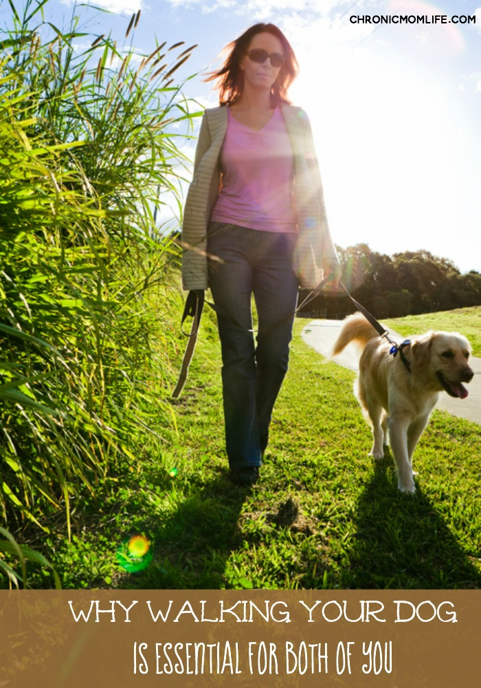 Dog Walking Services In Tampa