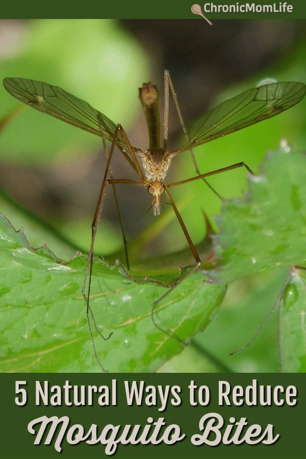 Natural Ways to reduce insect bites